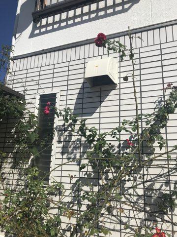 姫路市 換気扇のフードに穴が