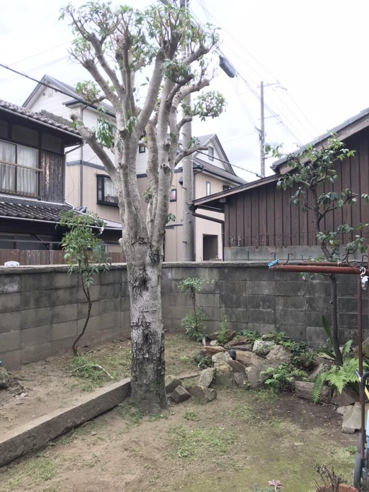 姫路市 定期的な植木の剪定