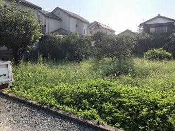 草刈り前6
