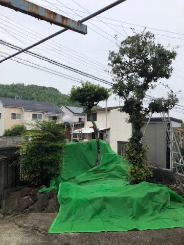植木剪定 姫路