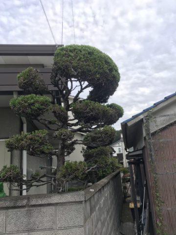 植木の剪定後 (6)