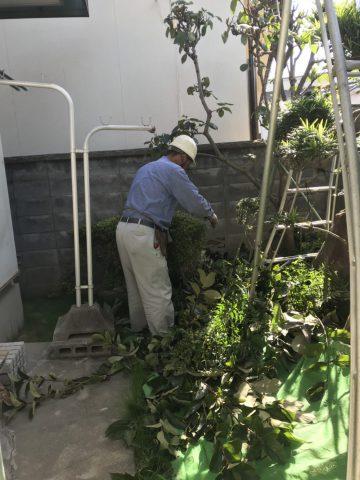 植木の剪定後 (7)