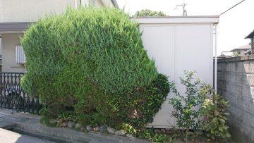 植木剪定前 (10)