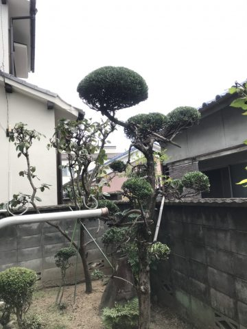 姫路市飾磨区 H様邸 植木剪定工事