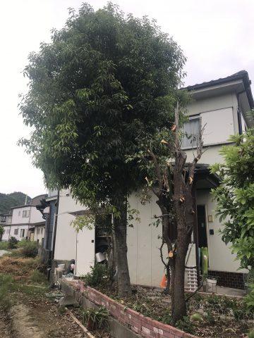 姫路市 記念の植栽