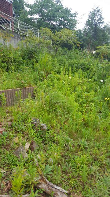 雑草木の伐採