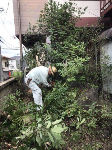 庭木伐採 姫路 オレンジナイト