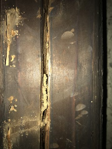 2階押入れの天井裏白蟻