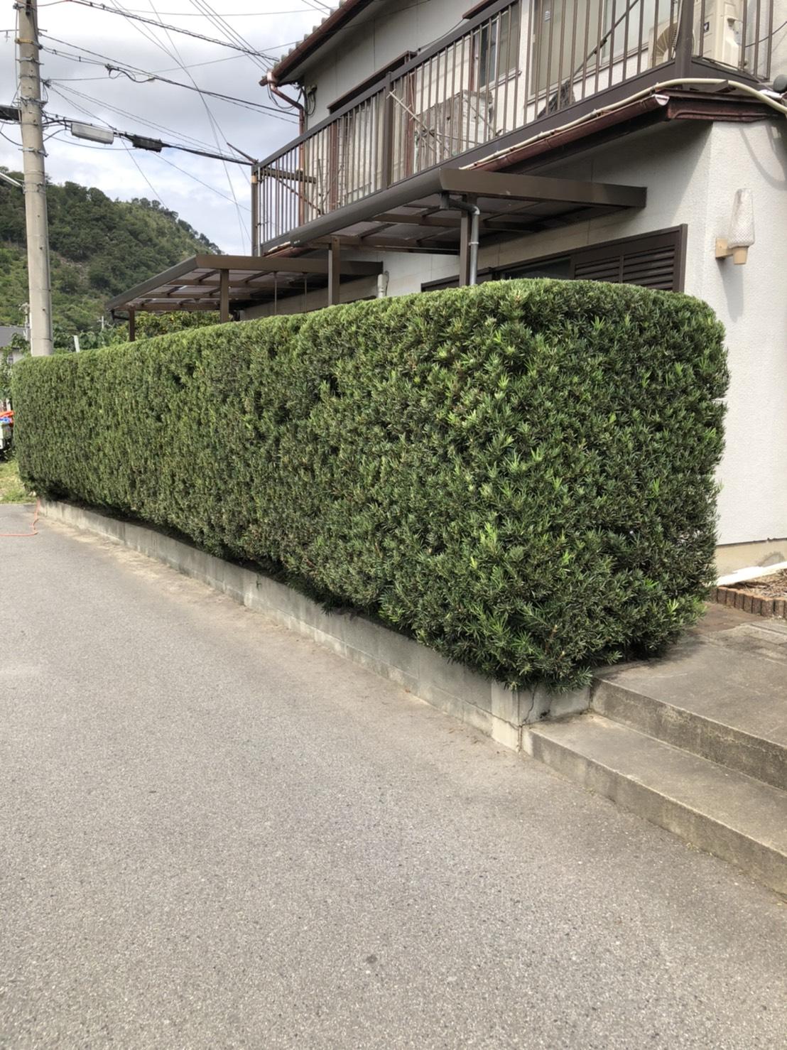姫路市 祭りまでに植木剪定工事