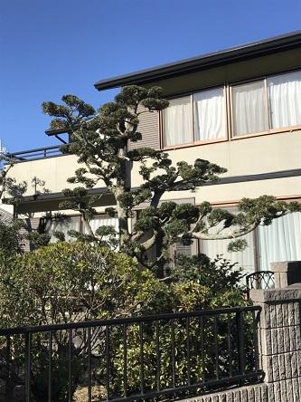 赤穂市 庭木がサッパリと剪定されました!