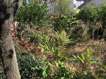 姫路市 雑草抜き、植木剪定