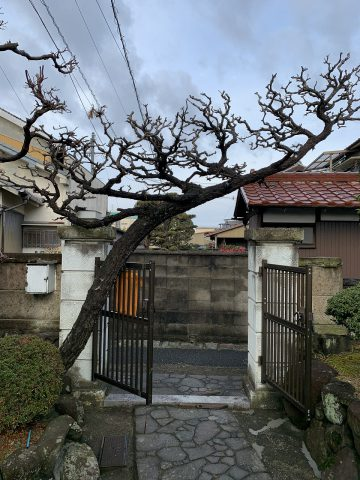 姫路市 植木伐採