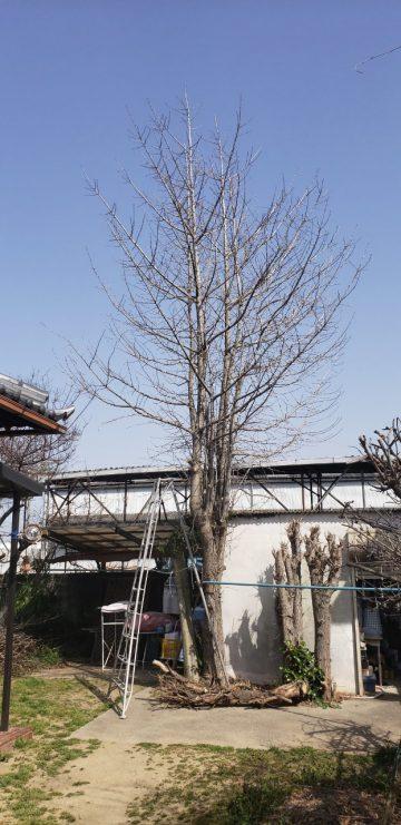 姫路市 植木伐採工事