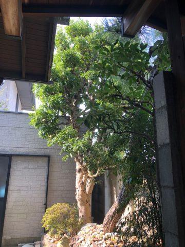 植木剪定 伐採 姫路