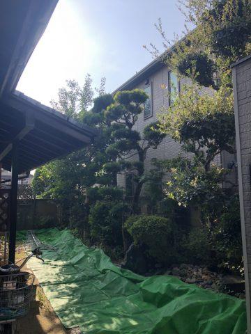 植木 剪定 庭師 姫路