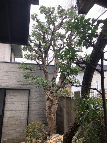 植木伐採 庭 姫路