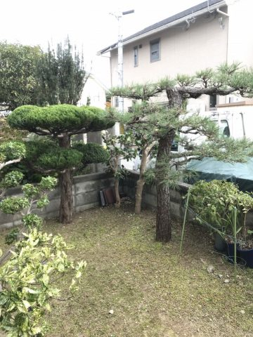 赤穂市 植木の剪定