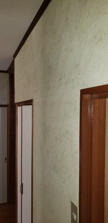 姫路市 廊下の珪藻土壁にカビ