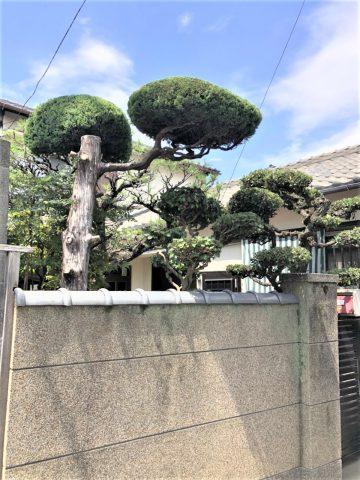 姫路市 植木剪定