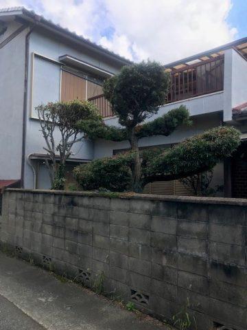 姫路市 植木の剪定