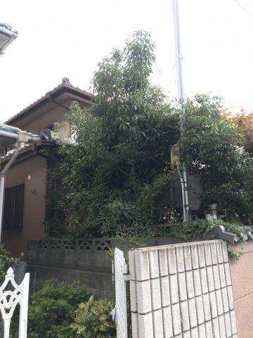 姫路市 庭木の伐採