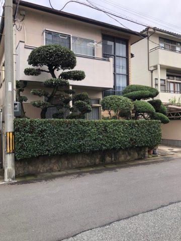 姫路市 毎年恒例の剪定