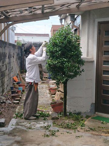 姫路市 植木の剪定及び伐採工事
